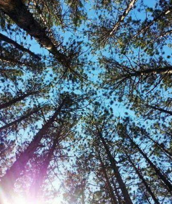View from a hammock in Sherwood Forest